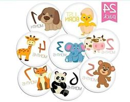 """24 PACK OF 4"""" PREMIUM BABY MONTHLY STICKERS BY KIDDOS ART. G"""